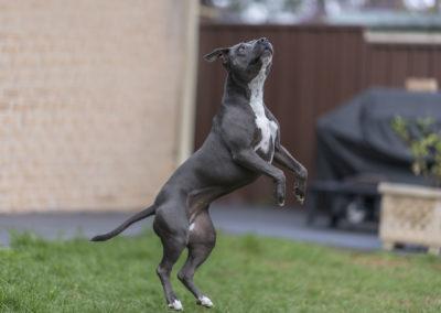 Lola - Dog Pet Photography Example - Rawad Tony Photography