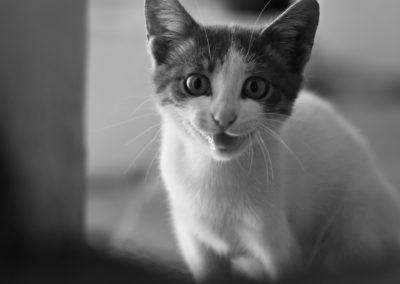 Chantelle - Cat Pet Photography Example - Rawad Tony Photography